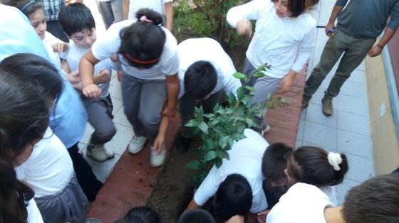 Plantando Arbol